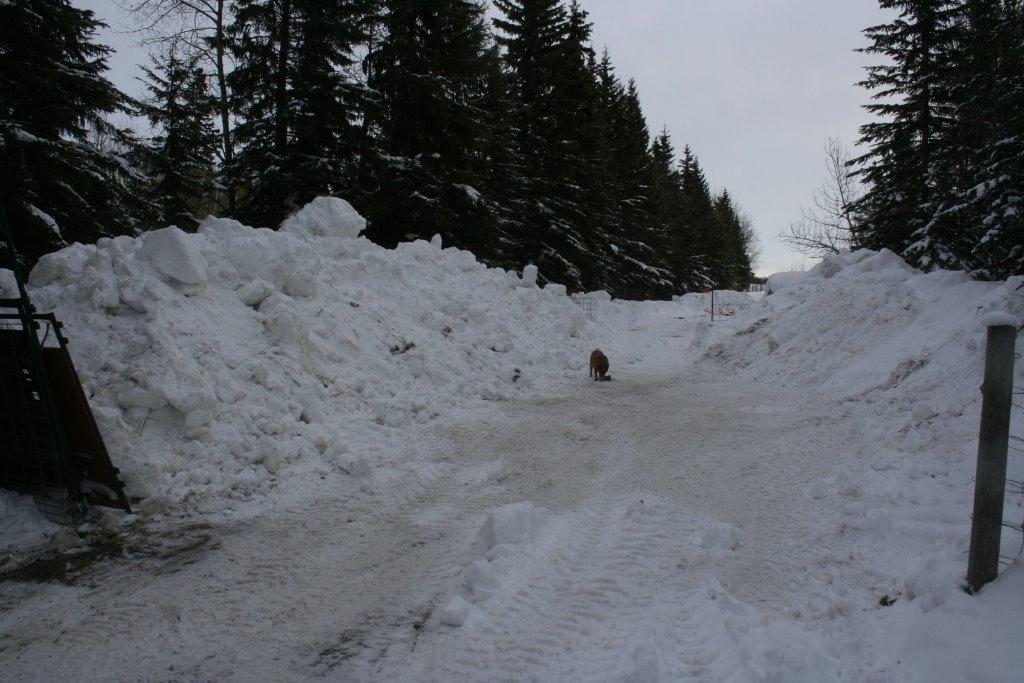 0 snow dec 2013 IMG_0714.jpg