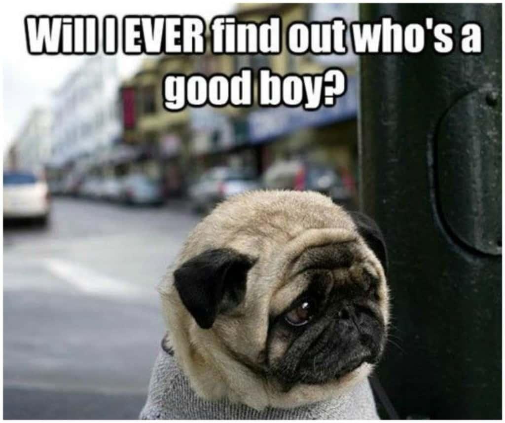 20-hilarious-animal-memes-that-will-make-you-lol-4.jpg