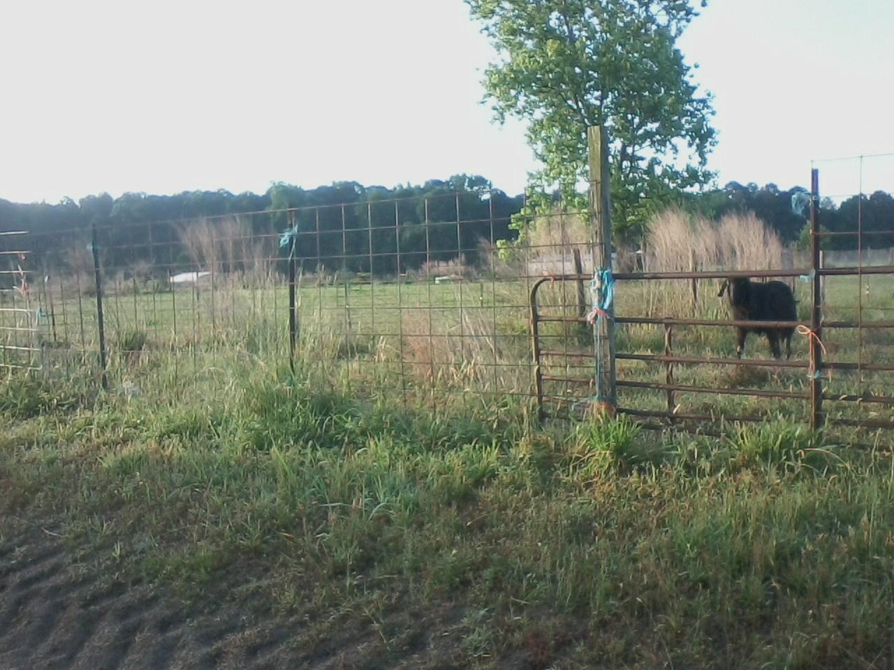 5.21.fencing1.jpg
