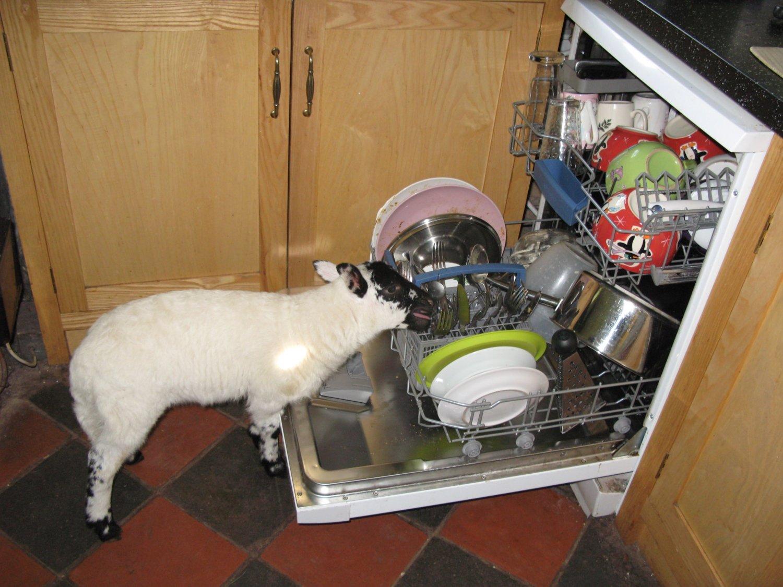 arya in dishwasher 2.jpg