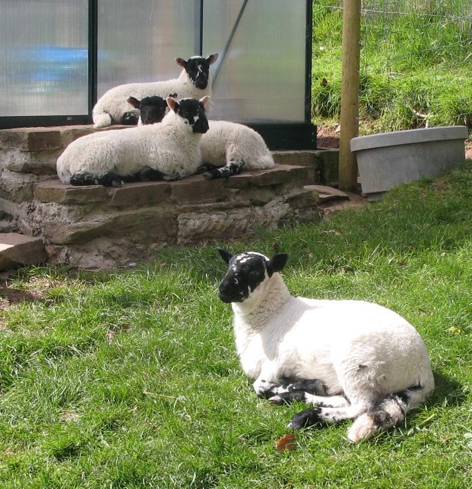 Bottle lambs and night skies 1.jpg