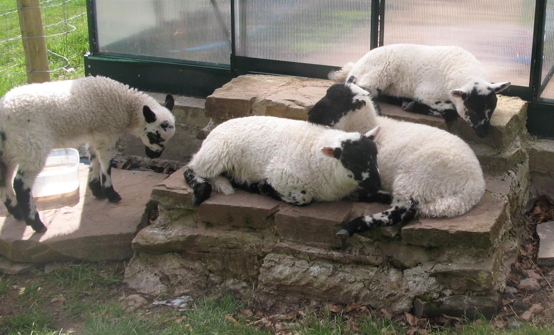 Bottle lambs and night skies 4.jpg