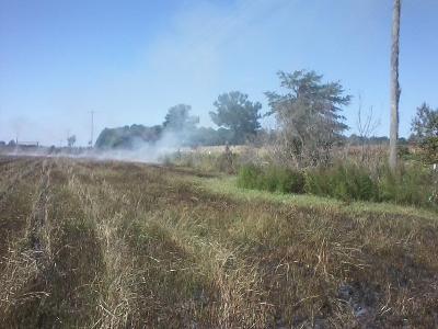 Burn field.2.jpg