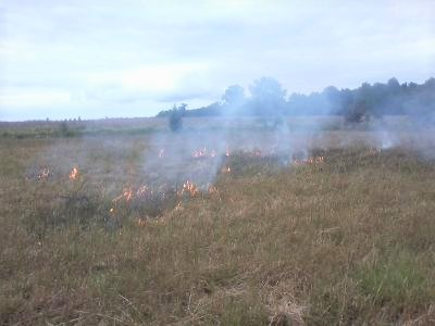 Burn field.3 (2).jpg