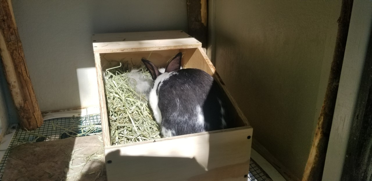 Daphne in New Nesting Box 6.26.2020.jpg