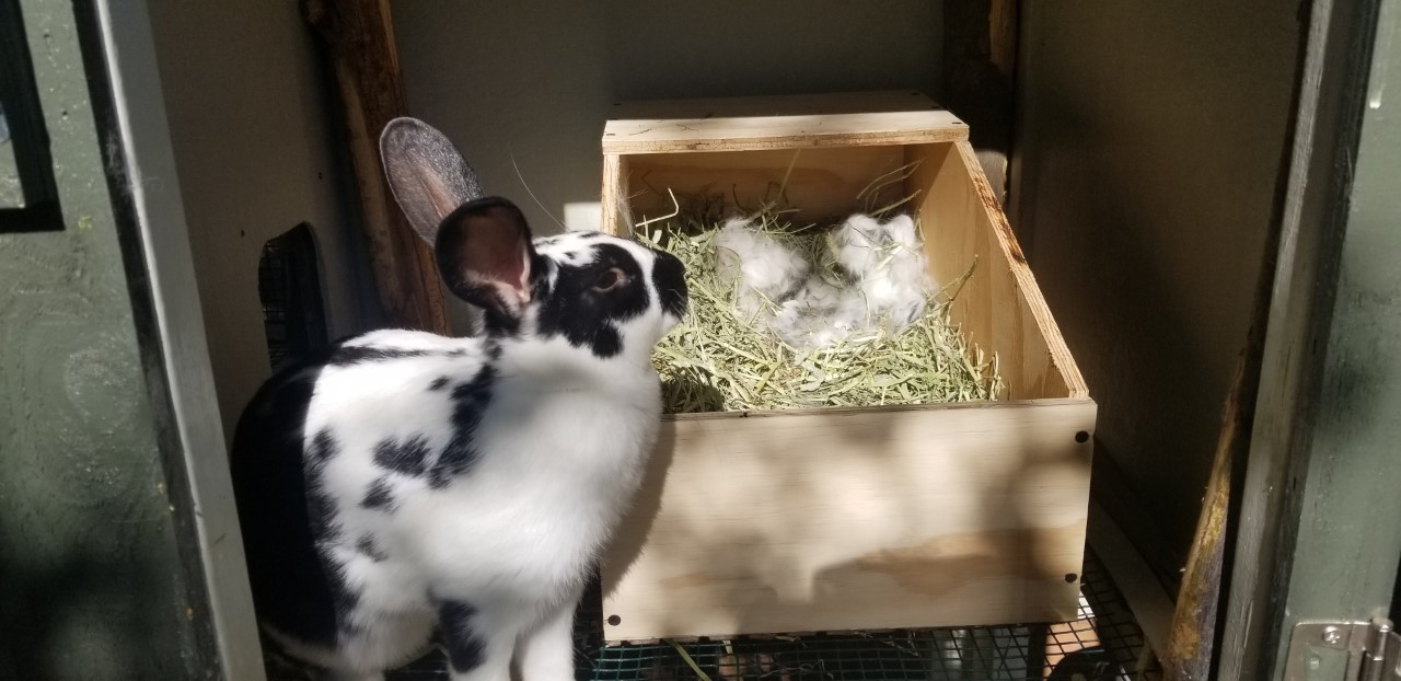 Daphne & New Nesting Box 6.26.2020.jpg