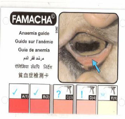 FAMACHAR-anaemia-guide.png