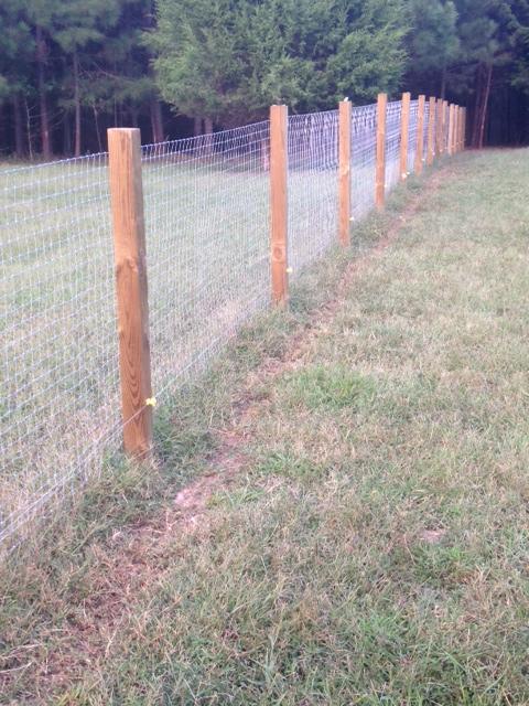 Woven Field Fence in Woods for Nigerian Dwarfs | BackYardHerds.com