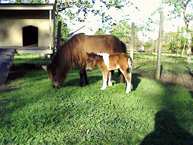 foalleft2.jpg