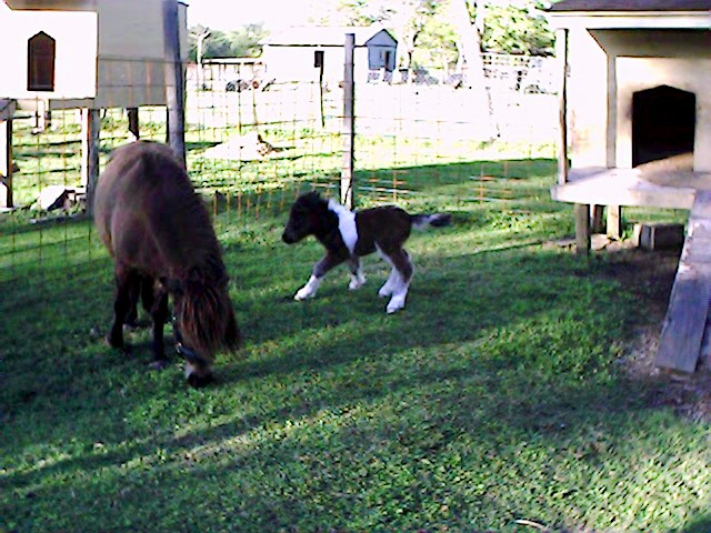 foalrun.jpg