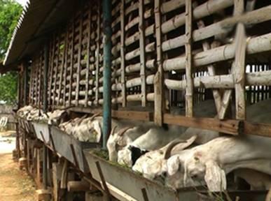goat feeding system.jpg