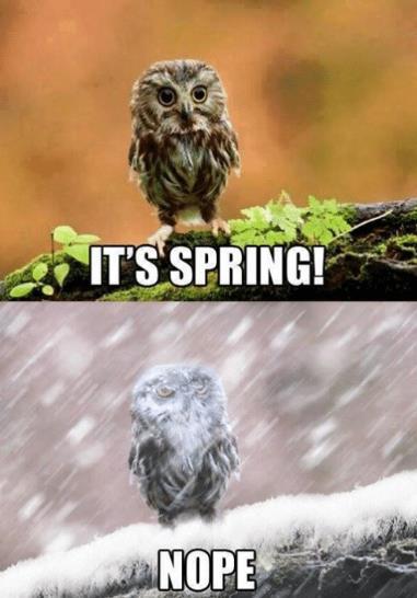 its spring nope.jpg