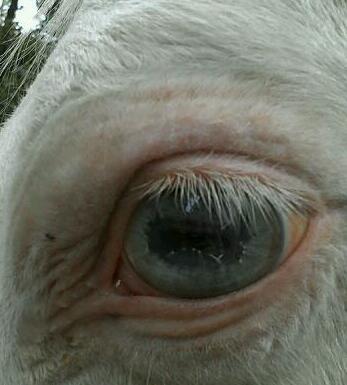 Joe blue eye.jpg