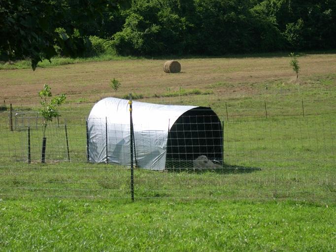 Maisys shelter.JPG