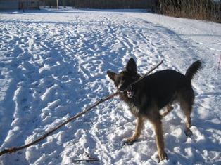 need bigger stick.jpg