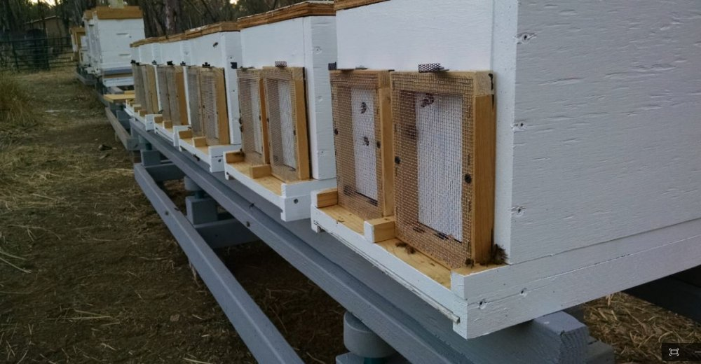 How To Make An Ant Proof Beehive Stand Backyardherds Com