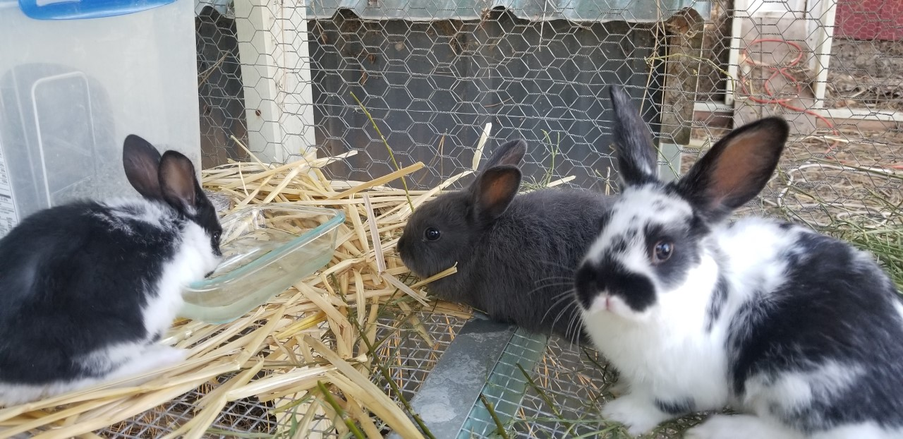 Rabbits First Day Together 4.9.2020.jpg