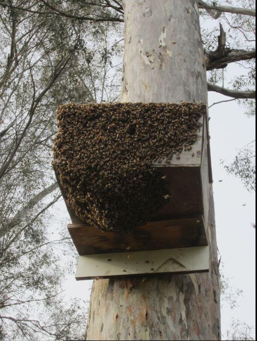 Swarm 03.30.18a.JPG