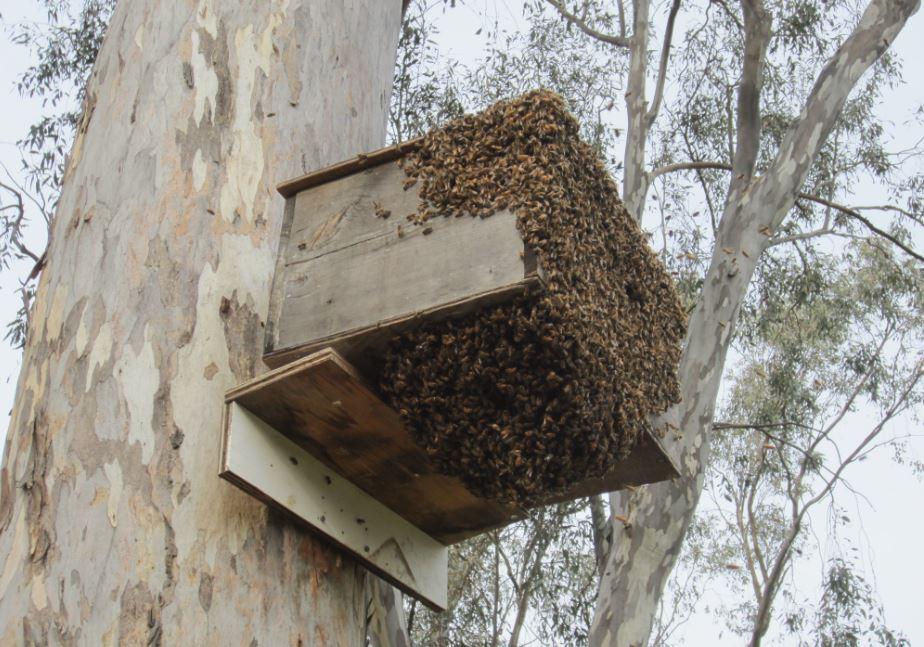 Swarm 03.30.18b.JPG