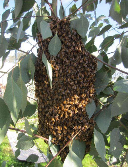 Swarm 04.01.18.JPG