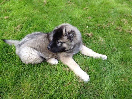 Zeus-puppy12.jpg