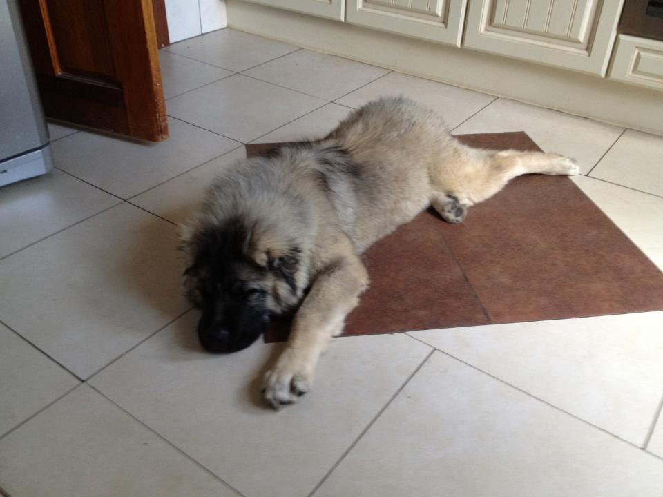zeus_puppy8.jpg