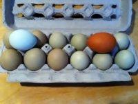 olive eggs 007.JPG
