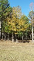 20201107_102733_sweetgum_small.jpg