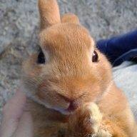 Bunnylady
