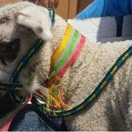 Lamb Lover