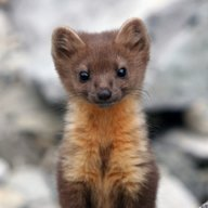 North Coast Chick