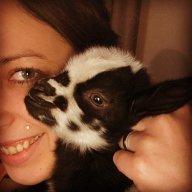 Livingstons&goats