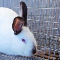 Suburban Rabbits