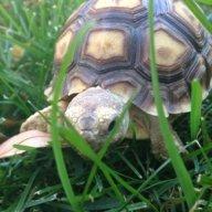 TurtleCrossingRanch