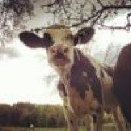 cattlecait
