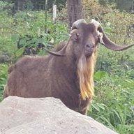 goatboy1973