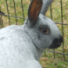how to make a rabbit wringer