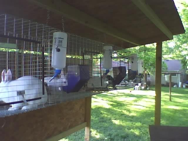housing meat rabbits | Page 2 | BackYardHerds.com