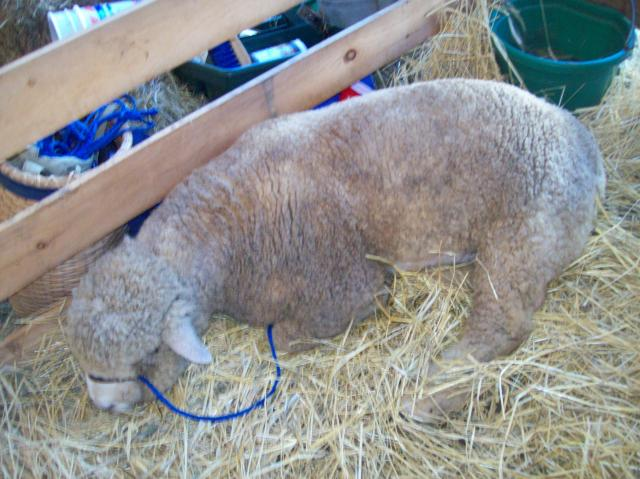 http://www.backyardherds.com/forum/uploads/2213_guilford_fair_docks_073.jpg