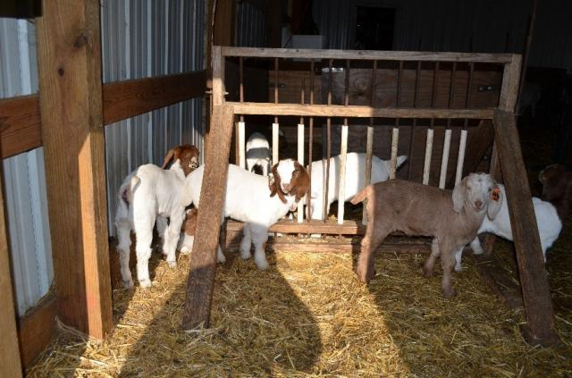 how to build a creep feeder for goats