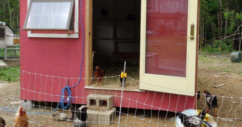 Chickens, coop