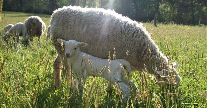 POW: June and her new little ewe lamb, July.