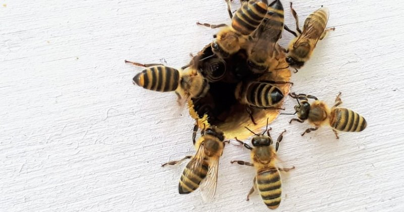 Bees In Weird Places