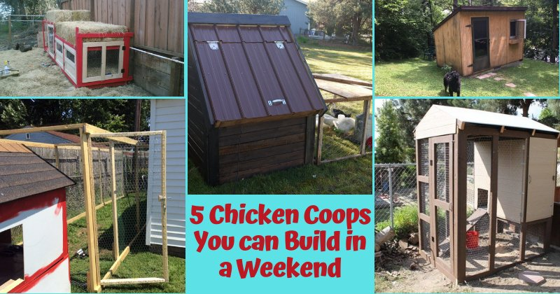 5 Chicken Coops You Can Build In A Weekend