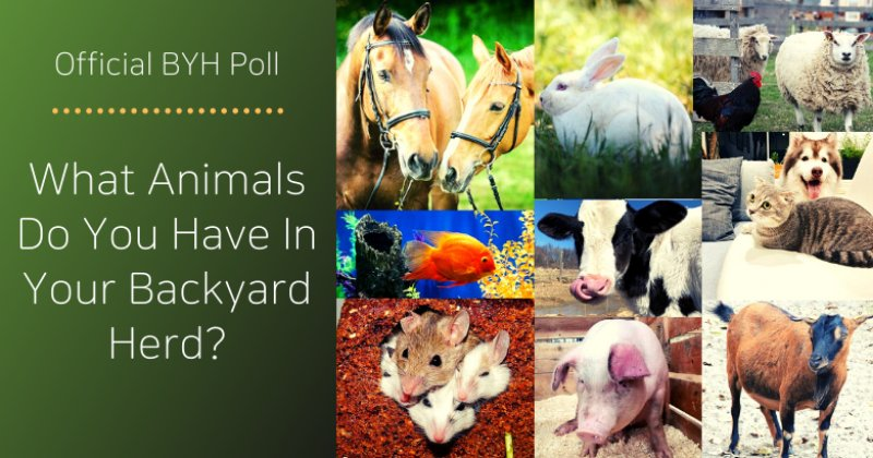 Official BYH Poll: What Animals Do You Have In Your Backyard Herd?