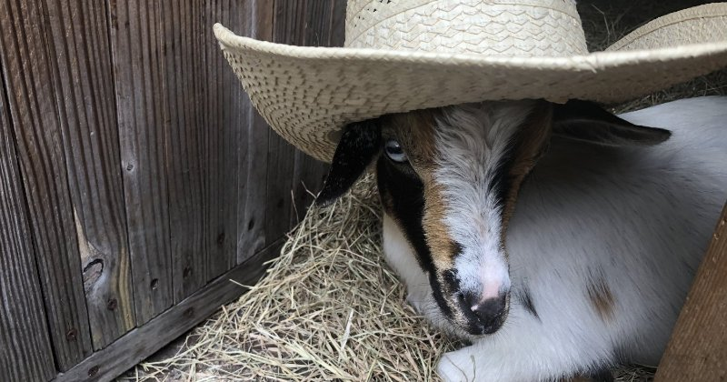 POW: Jade with her hat on from JadeFarms