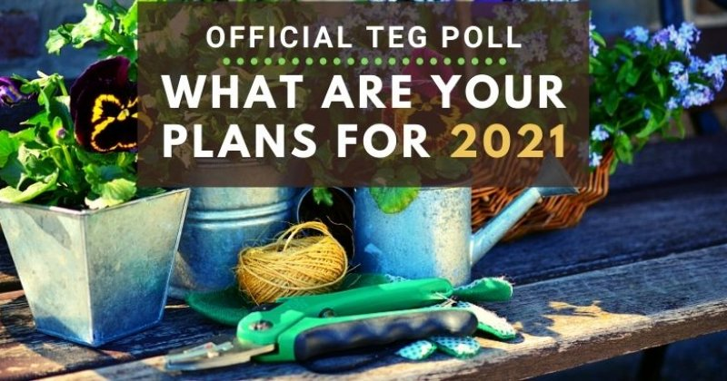 Official TEG Poll: What Are Your Plans for 2021?