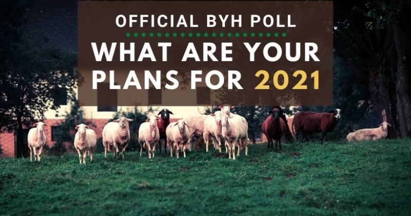 Official BYH Poll: What Are Your Plans For 2021?