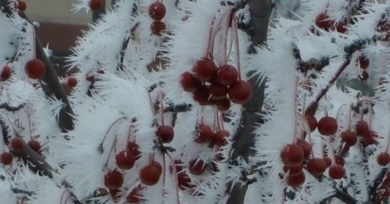POW: Beautiful Frosted Trees from Zeedman
