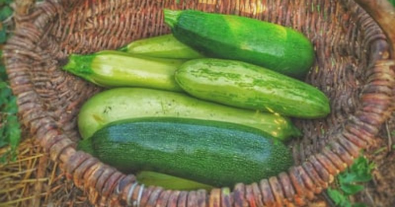 Grow Bags for Zucchini